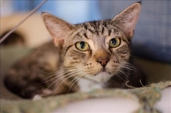 Hey there, I'm Chris from Townsville. I'm looking for a fresh start in a happy and loving hope. Is that yours? Come meet me today! http://bit.ly/2pzlfN3
