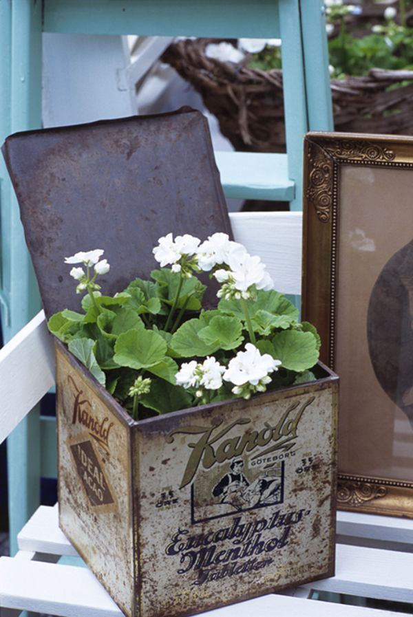 White geranium in an old tin - like this idea as a hostess gift or set in the bathroom on the counter or out on a porch.