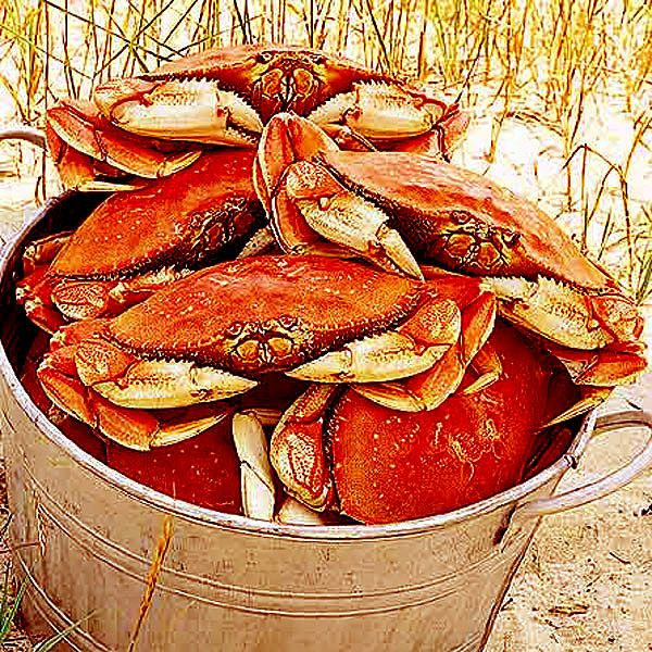 #foodie quiz - In San Fransico U can hope to eat what kind of Pacific crab - see hint:Food Seafood, Feelings Crabby, Crabs Seasons, Crabby Luv, Crabs Festivals, Yummy Things, Dungeness Crabs, Louisiana Seafood, Yummy Stuff