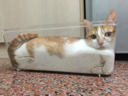 Dieses formschöne Stück Katze. | Einfach nur 19 Bilder von Katzen, die drolliger nicht sein könnten