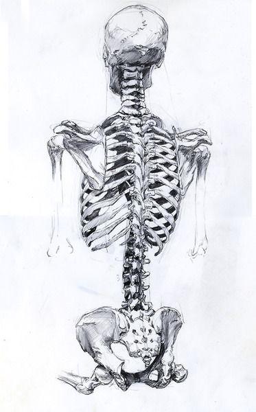 121 best Anatomi Kemikler/Anatomy Bones images on
