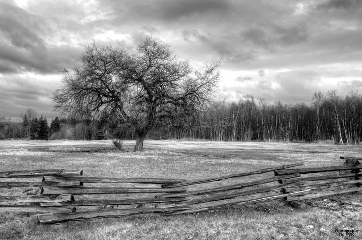 Standing gracefully in solace... Langley B.C    Photography at Way Of The Dove ~ facebook
