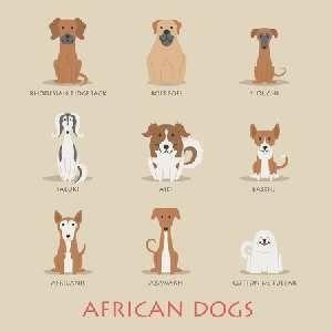 Dog For Adoption In Maharashtra