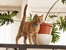 The Top 9 Indoor and Outdoor Commercial Cat Repellents: Ssscat! Cat Repellent Training System by Multivet