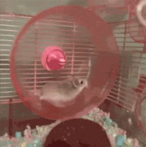 Hamster learns a quick physics lesson…