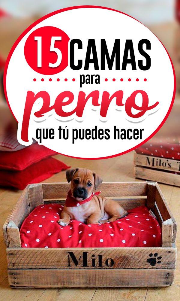 Ideas de camas para tu perro que tú mismo puedes hacer Pallet Dog House, Dog Body Language, Pet Hotel, Dapple Dachshund, Diy Dog Bed, Dog Furniture, Love Pet, Dog Coats, Happy Dogs