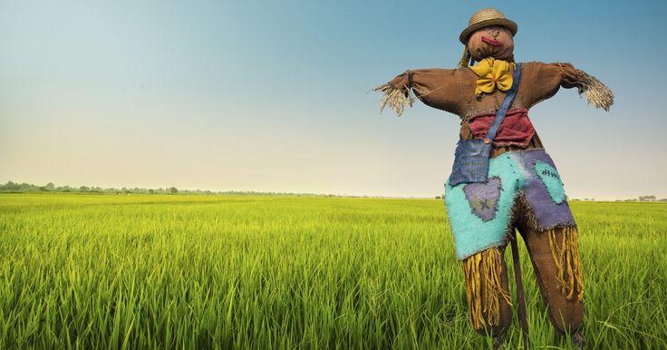 Como um espantalho assusta os pássaros?. O milho recém plantado é uma tentação para muitas espécies de pássaros e pequenos mamíferos, não apenas para corvos. Idealmente, um espantalho funciona porque imita a presença humana no jardim ou plantação de milho, o que espanta para longe os animais silvestres. Porém, mesmo que funcione por um tempo, os bichos vão ficando mais espertos e, a um ...