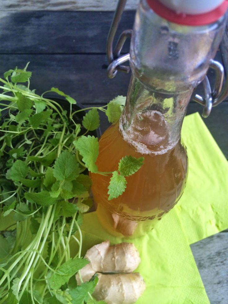 Domácí zázvorový sirup s meduňkou pro zdravé srdce a pohodovou jízdu na řetízkáči   Home-Made.Cz