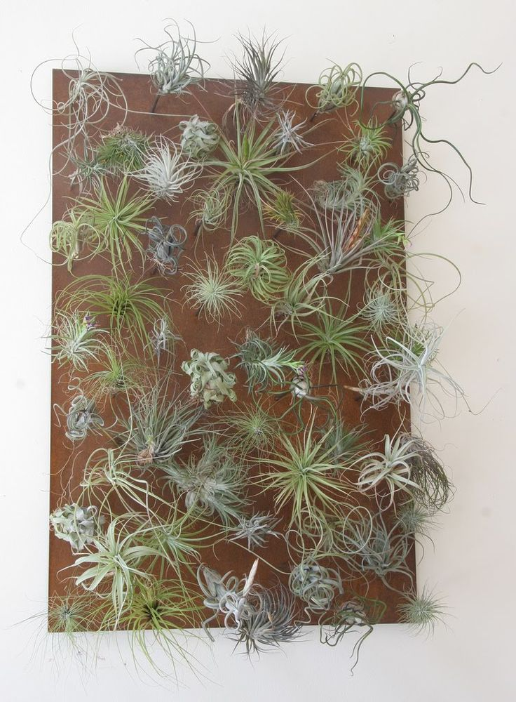 air plant wall