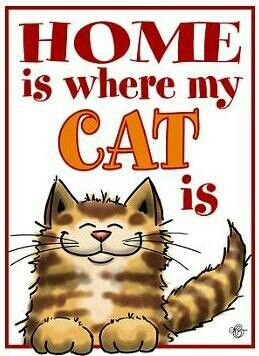 Home is where our kitties want us to be. To wait on them 24/7, and fill any quirky need they might think of.