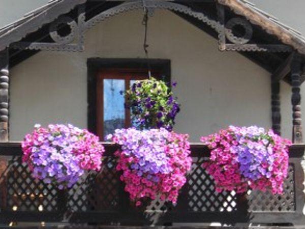Civico20 News   Mini guida ai fiori da balcone: il balcone al sole