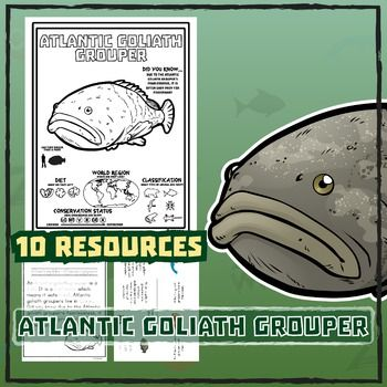 Atlantic Goliath Grouper -- 10 Resources -- Coloring Pages, Reading &…