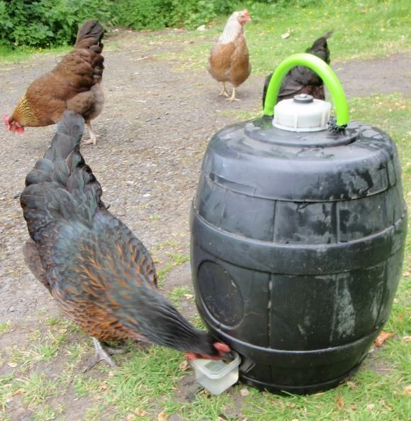 I just thought I'd put up a few photos I took of our homemade chicken waterer, MK2, while I was sorting out the rhubarb champagne the other day. Now I know this is nothing particularly revolu…