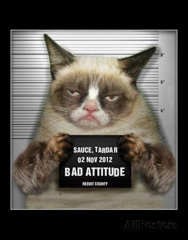 Grumpy Cat Mugshot Humor Poster Posters at AllPosters.com