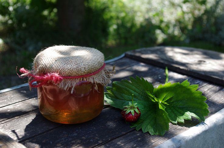 VAŘÍME: Jahody v medu - ( DIY, Hobby, Crafts, Homemade, Garden, Creative, Ideas)