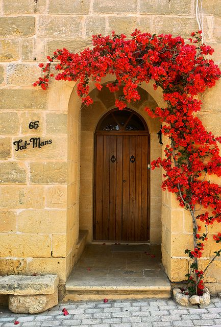 Maltese Door... must do a planting like this one around my new front door... what a wonderful way to walk into someone's home!
