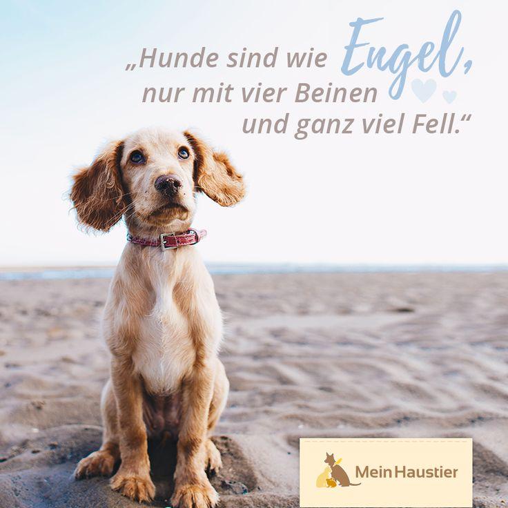 #dogsweep #dogdog #mouthdog #dogs #dog #