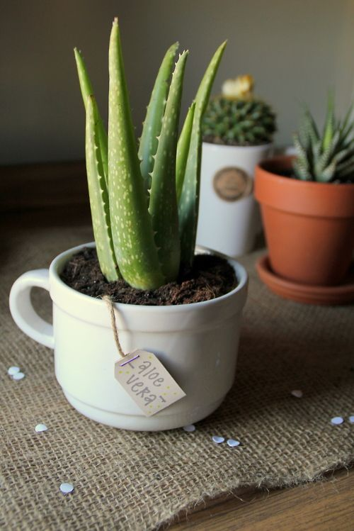 "DIY ""Tea Bag"" Plant Label. Cute and easy present anyone can make."