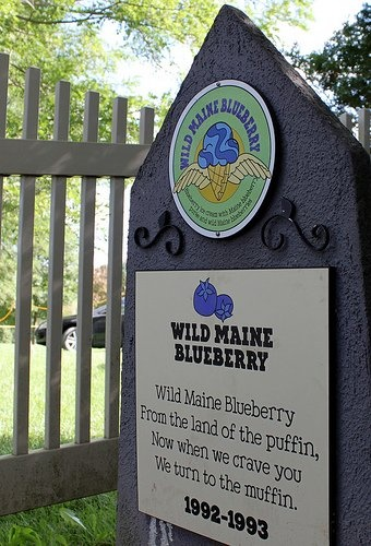 Wild Maine Blueberry From the land of the puffin, now when we crave you we turn to the muffin. 1992-1993: Ben and Jerry's Flavor Graveyard