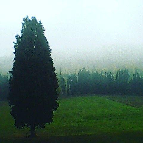 A truly reflective landscape...  #takemethere #villacampestri #oliveoilresort #experience #oliveoil #mugello #tuscany