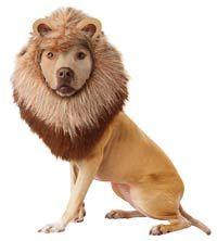 Lion chien Costume - Dog Costumes