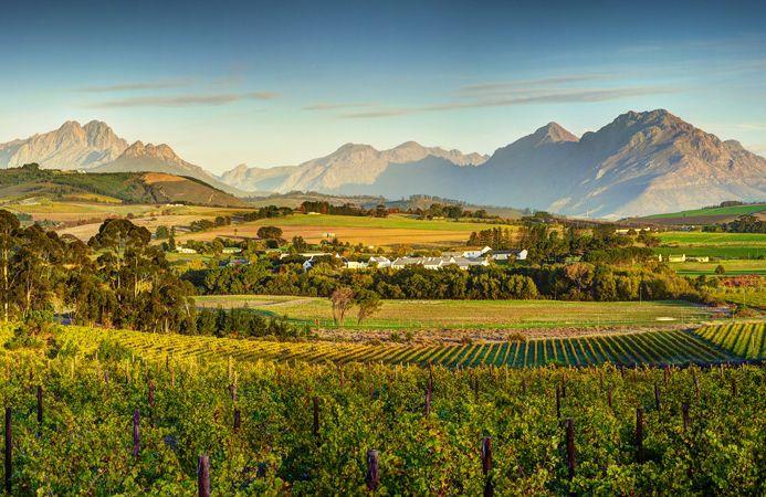 Simonsig Wine Estate, Stellenbosch