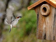 Everything you need to know about birdhouses, even what kind to build for the types of birds in your area and which you want to attract to your backyard or viewing area.