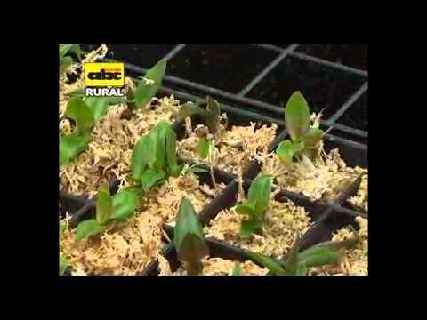 Curso Cultivo de Orquídeas - Substrato para Orquídeas - Cursos CPT - YouTube
