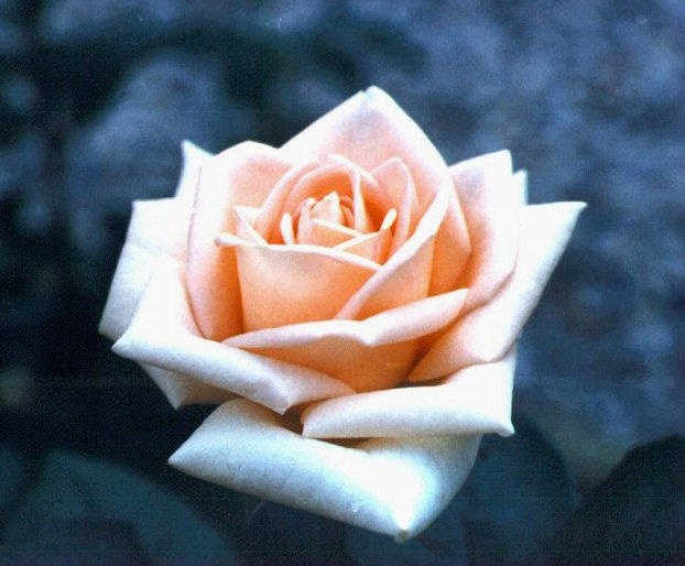 Osiana rose | My resume | Pinterest