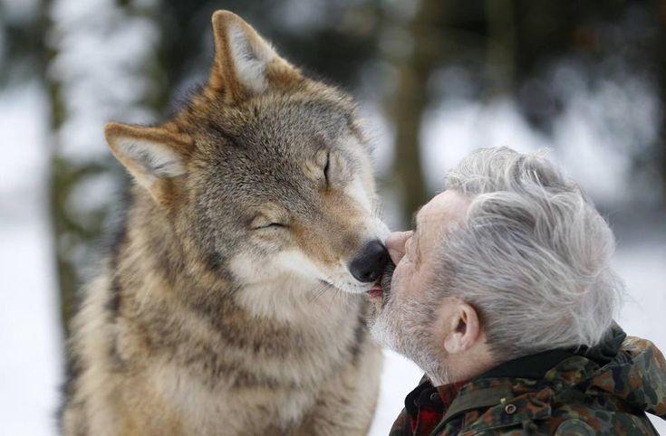 Werner Freund    he lives with 29 wolves in Merzig, Saarland