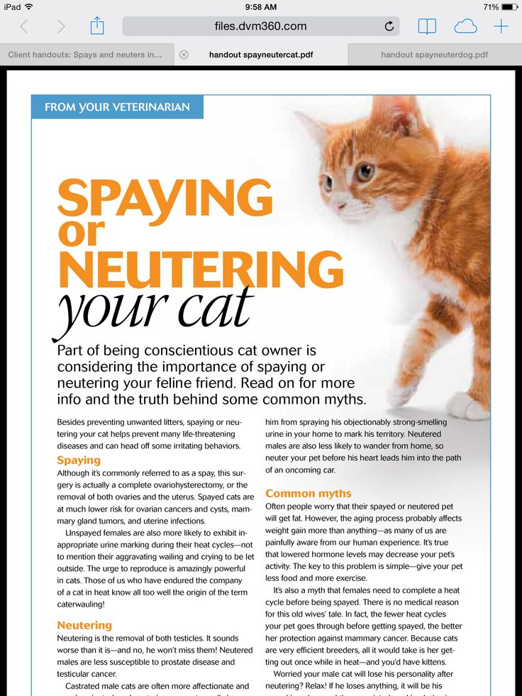 Spaying or Neutering your cat Cat care, Animal hospital