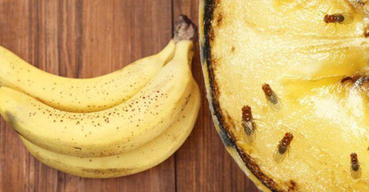 Vem älskar inte färsk frukt och grönsaker? Speciellt så här års. Tyvärr gör flugorna det också. Och de tar över snabbt. Men misströsta inte. Här får du förslag på 5 enkla lösningar!