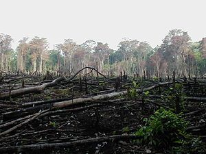 Is overuse of paper the reason of deforestation?
