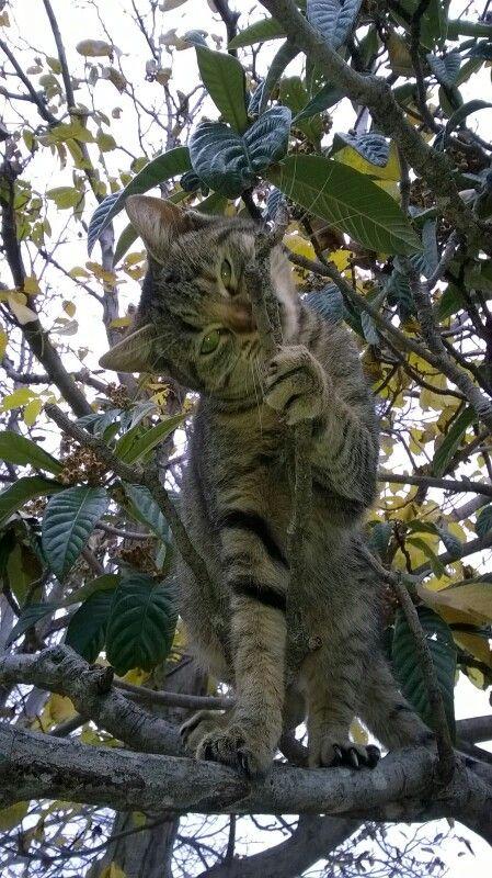 Gattino sull'albero #agriturismoilportone
