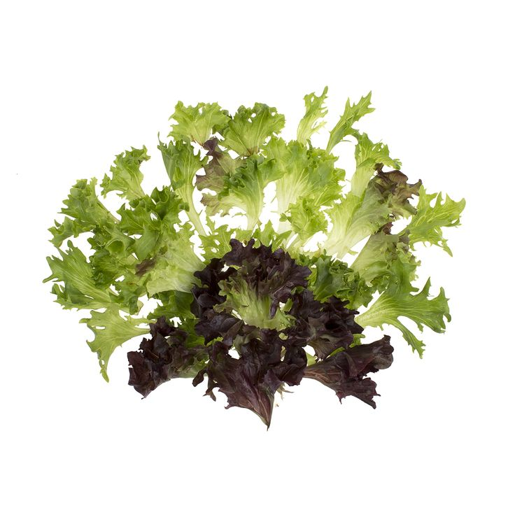 Mann Packing Arcadian Harvest Mix - HIGH YIELD! This European-style blend of 14 salad greens including lolla rosa, red and green leaf and oak lettuces is Mann Packing's answer to consumer demand for salads blends with heft.