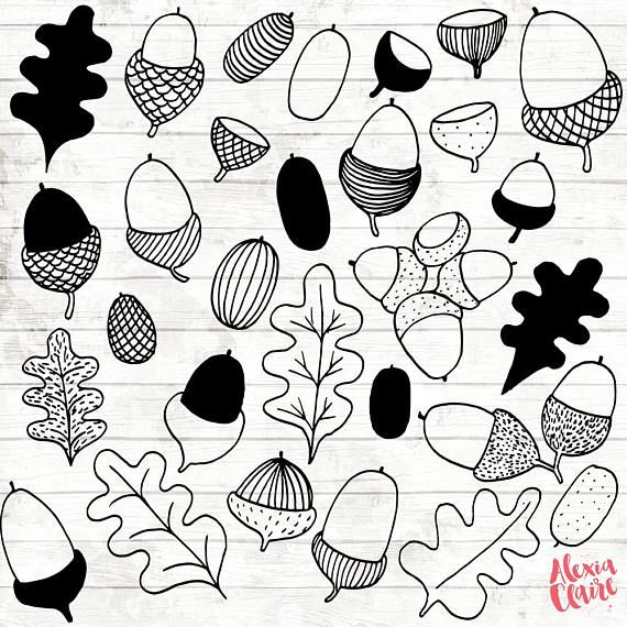 Eicheln Clipart – 17 von Hand gezeichnet Eichel Clipart – Blatt Logo Kunst – Eiche Blatt Logo-Elemente – Botanische Illustration – 74