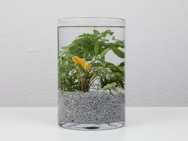 un beau jardin aquatique un jardin en bocal pinterest poisson et articles. Black Bedroom Furniture Sets. Home Design Ideas