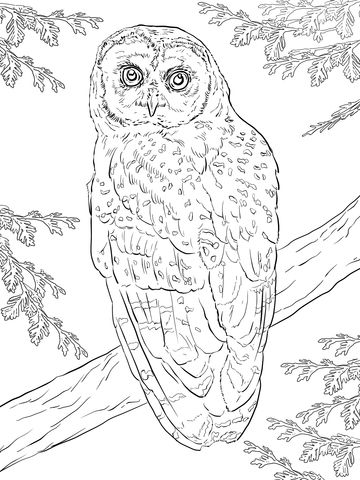 Northern Spotted Owl coloring page from Owls category