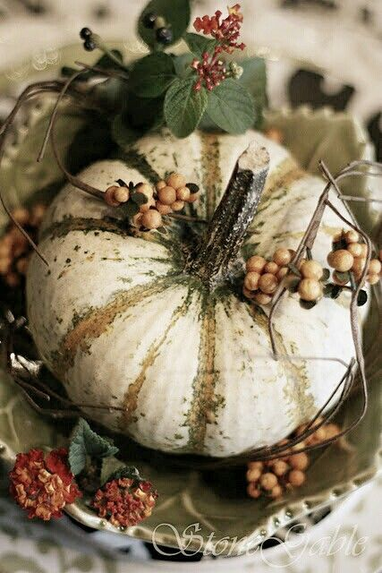 Pin by katherine on pumpkins squash and gourds