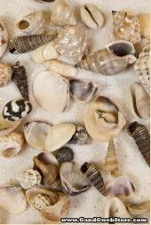 KIS tengeri kagyló kevert természetes PKG / 1GAL