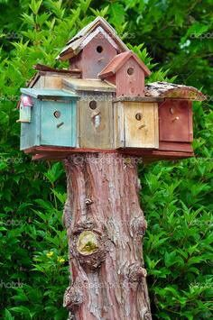 Image Detail For  Stacked Birdhouses On Top Of Tree Stump