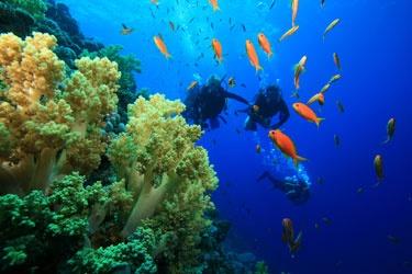 Scuba Dive in Roatan, Honduras! Gahh. Ive been to Honduras before but never Roatan!!
