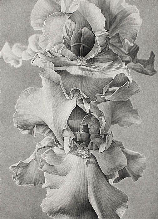 Symbolic - Iris