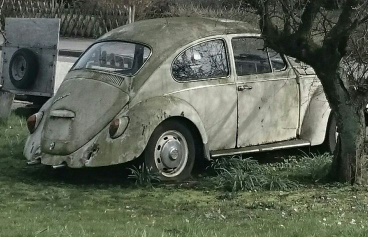 Old bettle