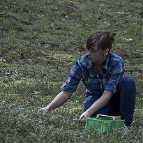 La cueillette de Myrtille Sauvage dans la forêt de Notec en Pologne #SavoirCeQuonMange #Les2Vaches #Bio