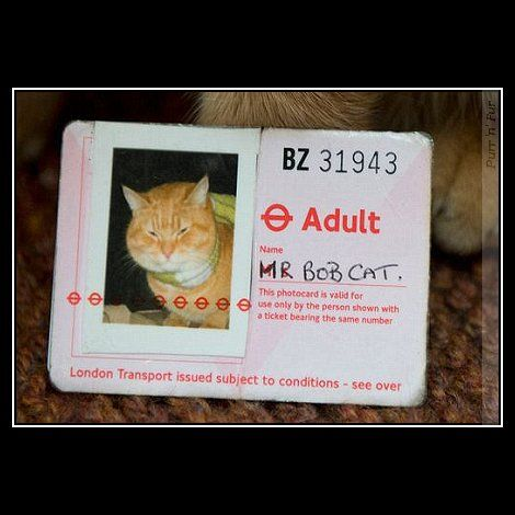 Bob cat has his own travel pass? now there's something you don't see every day.