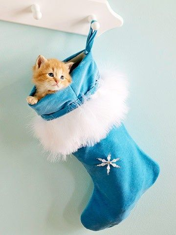 Cool Blue and White Decorations for the Holidays