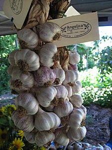 Angelica Farm Garlic