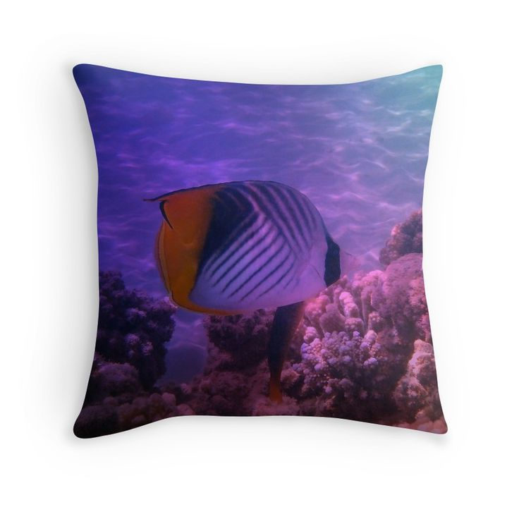 Threadfin Butterflyfish Colorfully