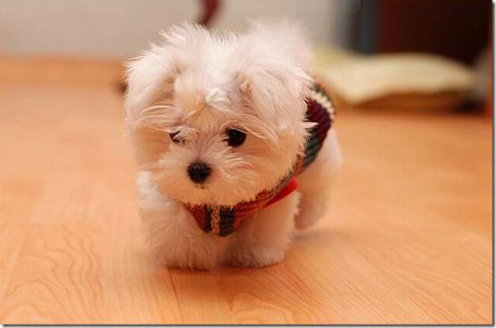 Need this puppy